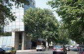 Floreasca Business Center spațiu de birouri Calea Floreasca perspectivă încadrare în zonă